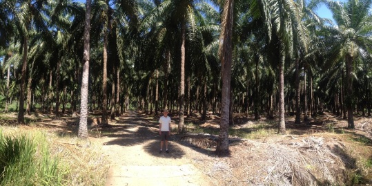 Frank in Palm Grove