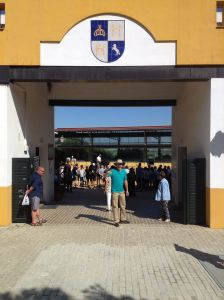 Brian at Andalusian Stud Farm Arena Gate