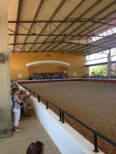 Horse Show 9