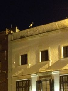 Jerez - Stork on Rooftop