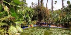 Majorelle Garden 3 Marrakech