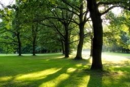 tiergarten-trees-berlin