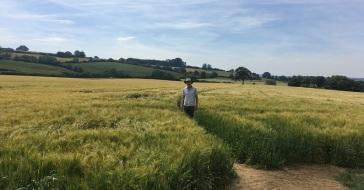 Wheat Path