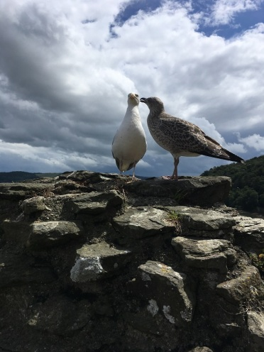Conwy Gulls