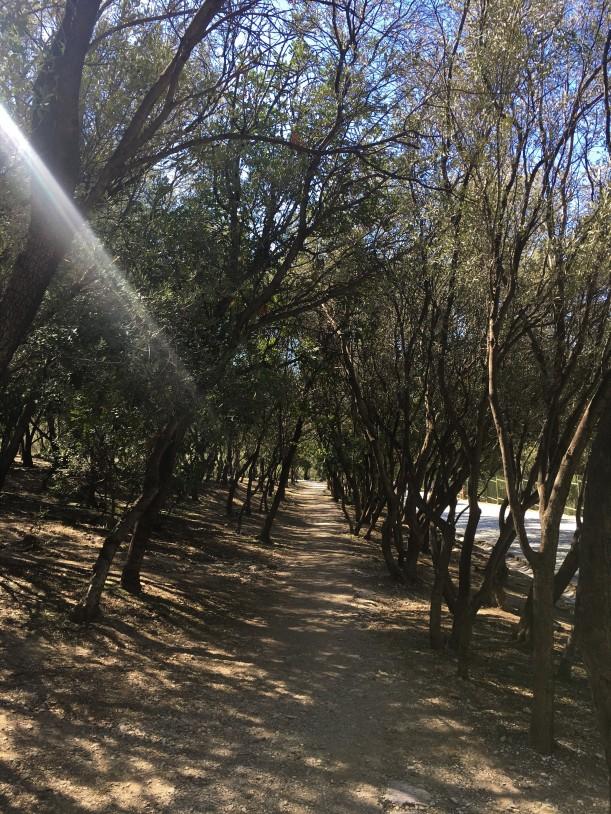 Athens - Olive Grove at Ancient Agora