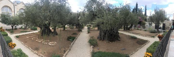 Peace in Gethsemene